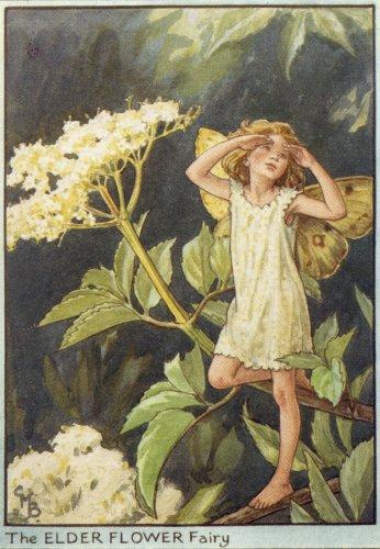 The_Elder_Flower_Fairy